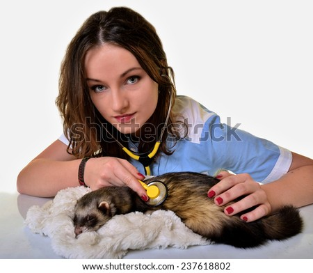Ferret and veterinarian - stock photo