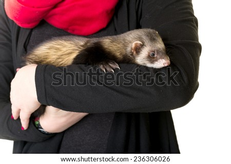 Ferret in the hand - stock photo