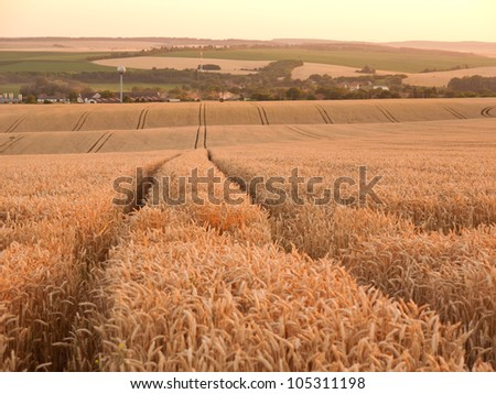 Fertile plains with rich harvests of grain just before harvest