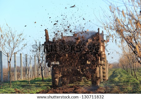Fertilize of cow dung from tractor trail in hazelnut orchard - stock photo