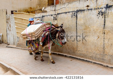 FES, MOROCCO - SEP 9, 2015: Donkey walks in Fez, the second largest city of Morocco. Fez was the capital city of modern Morocco until 1925 and