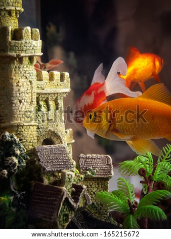 Few goldfish in the aquarium near their castle.
