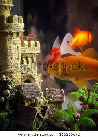 Few goldfish in the aquarium near their castle. - stock photo