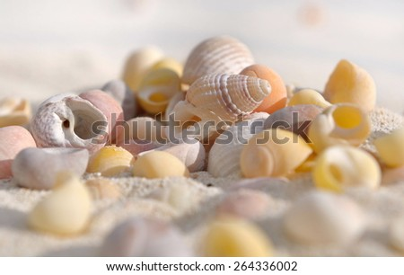 few small shells in the sand on the beach - stock photo