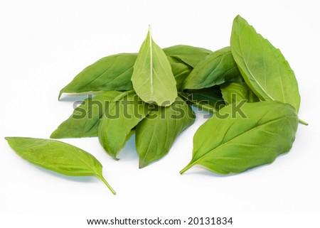 few sprigs of Italian sweet basil, Ocimum basilicum, over a white background. - stock photo