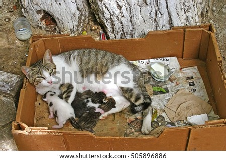 FEZ, MOROCCO - MAY 19 2006: Mother cat suckling her four kittens in a dirty cardboard box in the ancient medina of Fes el Bali, in Fez, Morocco.
