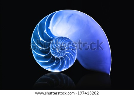 fibonacci pattern on shell viewed spiral from front - stock photo