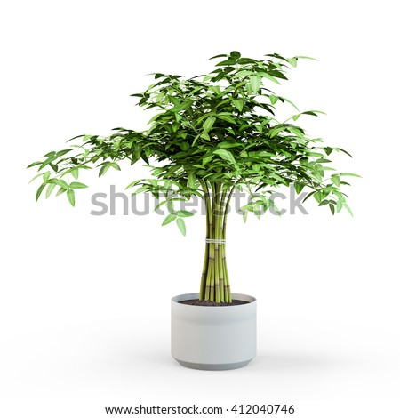 Ficus Benjamin in pot isolated on white background. 3D Rendering, 3D Illustration.