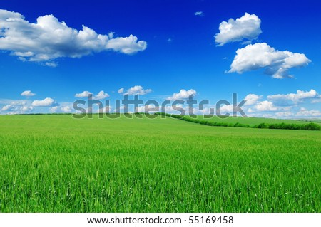 field and blue sky - stock photo