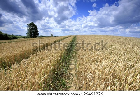 Field and deep blue sky - stock photo