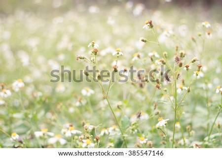 Field and natural bokeh - stock photo