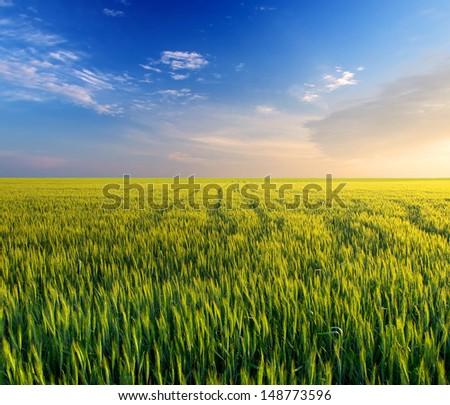 Field and sky during sundown. Beautiful summer landscape - stock photo
