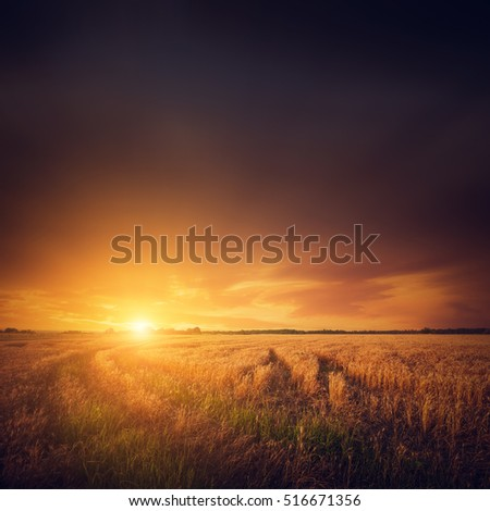 Field and sunset, summer landscape