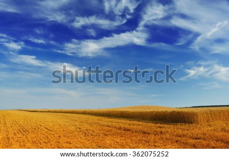 field at after harvest - stock photo
