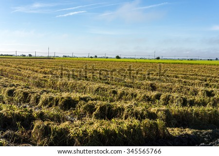 field at after harvest agricultural