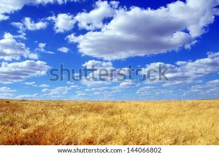 Field at Alentejo region, Portugal. - stock photo