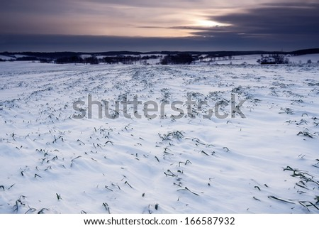 field at winter. rural landscape