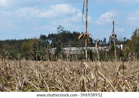 Field covered with dry corn stems with a chicken barn and wild hills in the background