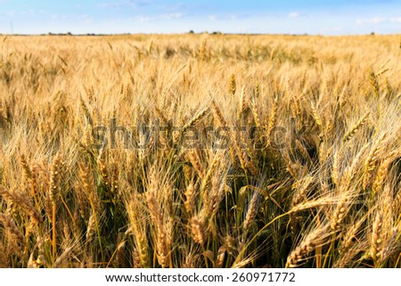 field crops - stock photo