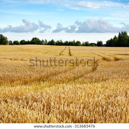 Field crops - stock photo