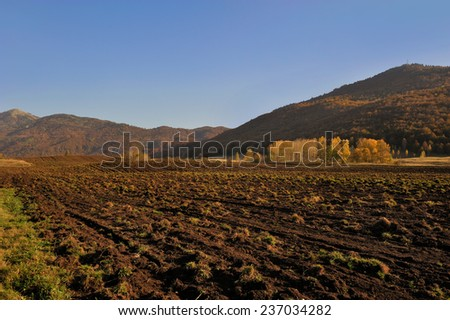 Field for cultivated organic food  - stock photo
