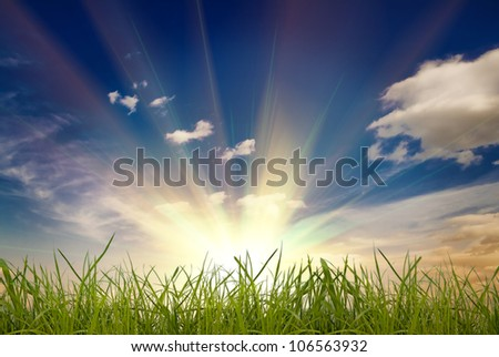 field green grass isolation on the white backgrounds - stock photo