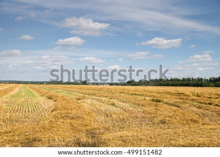 Field haystacks rural summer view