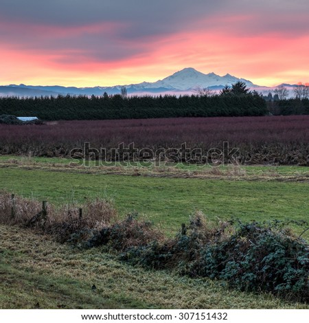 Field in front of mount Baker at Sunset - stock photo