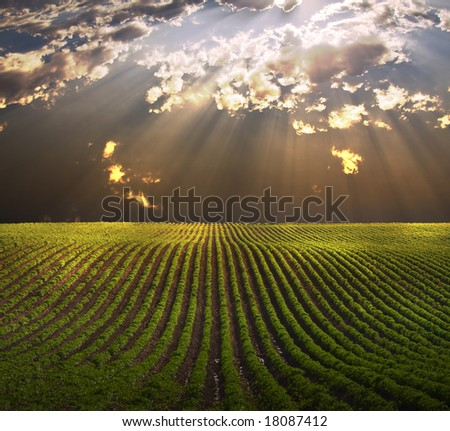 Field in shafts of light - stock photo
