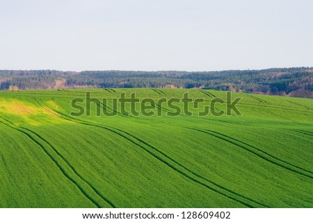 field in spring. landscape - stock photo