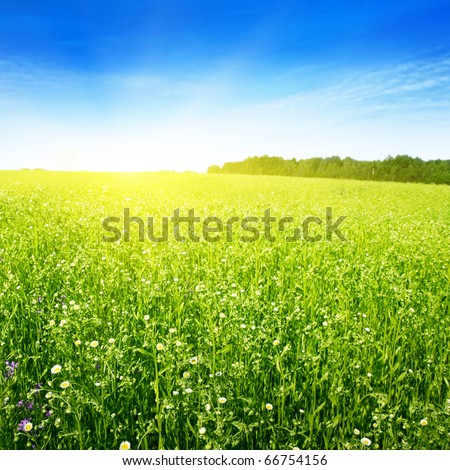 Field in summer and sun in blue sky. - stock photo