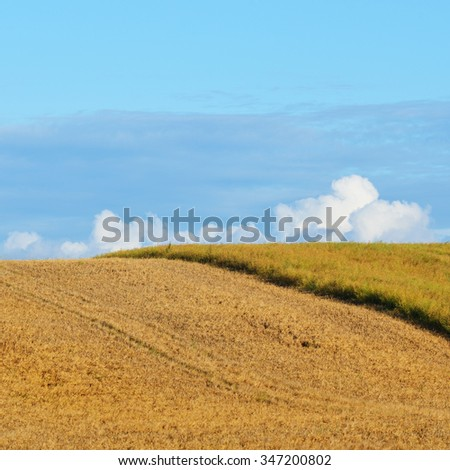 Field in the countryside area