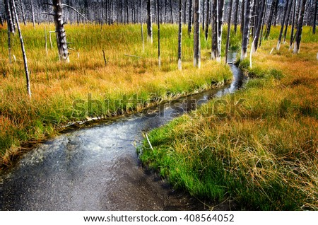 Field in Yellowstone with creek stream dead pine trees green grass - stock photo