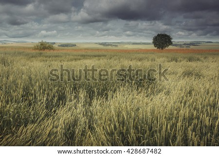 Field, lonely tree and dramatic sky. Insragram filter - stock photo
