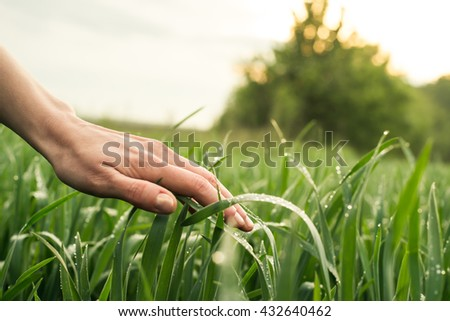 Field, nature with hand or palm. Rural agriculture. Growth of green cultivated plant in summer, spring on the farm. Food industry. Outdoor scene with land, sky. Season of farming.