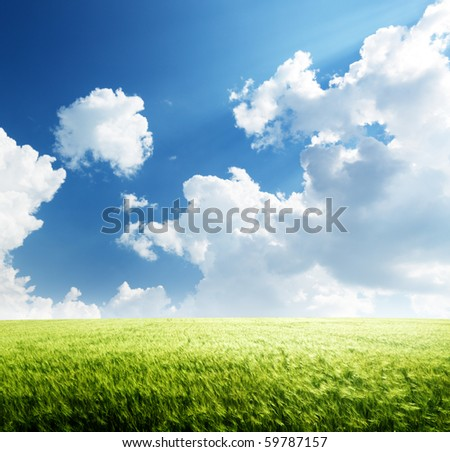 field of barley and sunny day - stock photo