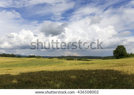 Field of Barley in the storm summer country Landscape - stock photo