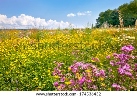 Field of beautiful flowers and grass. Summer landscape. - stock photo