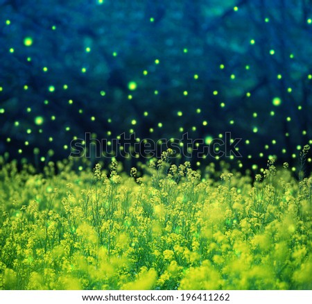 Field of canola or rapeseed with, sparkling glowing light. Glowing light has been added and  rendered digitally. Photo based digital Composite. - stock photo
