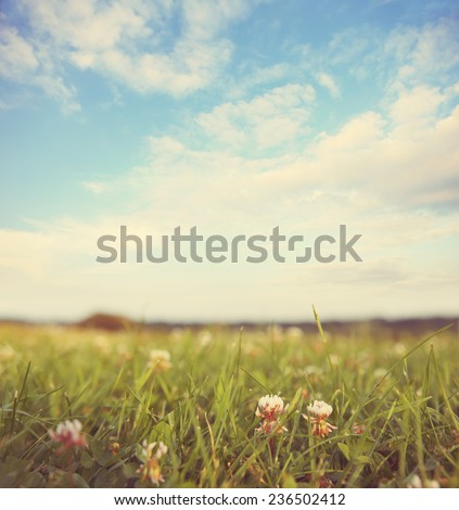 Field of Clover on a summer day background.  Instagram effect. - stock photo