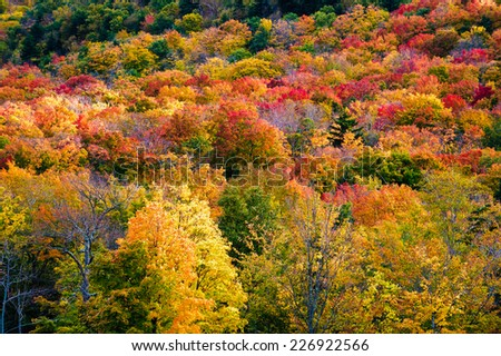 Field of colorful tree fall foliage landscape, Stowe, Vermont, USA - stock photo