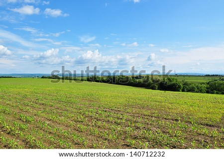 field of corn sprouts over blue sky - stock photo