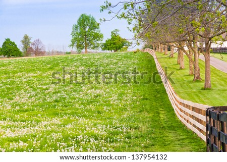 Field of dandelions at countryside. - stock photo