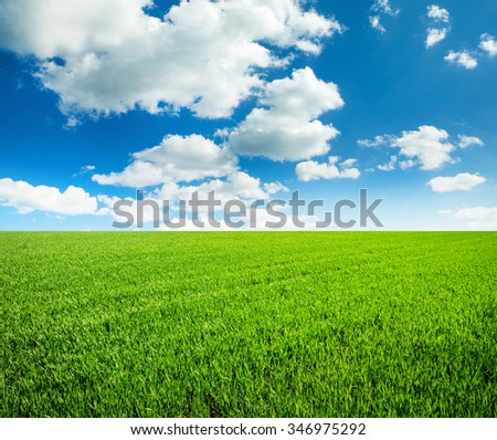 field of grass and perfect sky