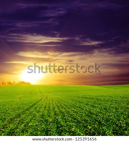 field of grass and sunset. Beautiful blue sky and white clouds. Deep blue sky and clouds. Green Field. wonderland. - stock photo