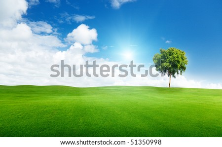 field of grass and tree - stock photo