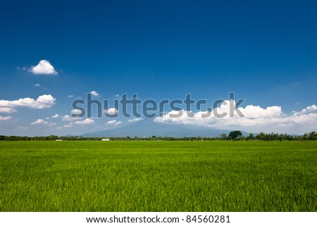 Field of grass and volcano at the background. Java, Indonesia. - stock photo