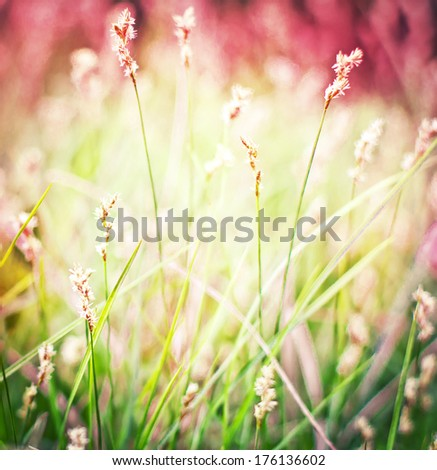 field of grass in spring or summer day / toned pictures - stock photo