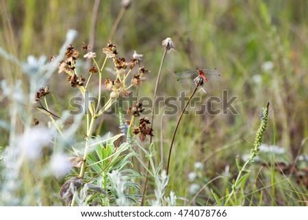 Field Of Grass In The Desert Summer