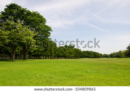 Field of grass with sky in spring landscape at Bangkok, Thailand. nature  background.